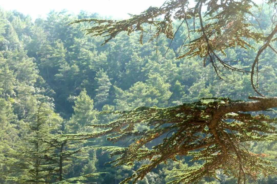 Cyprus Forests are beautiful