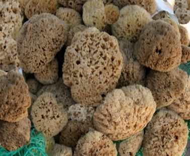 How sponge (material) is made in Cyprus