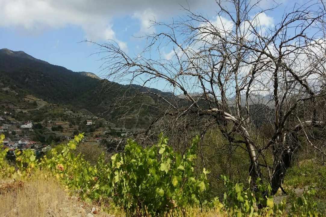 Το Χωριό Άγιος Κωνσταντίνος Λεμεσού