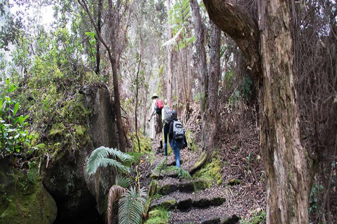 Hiking  Artemis Trail, Troodos
