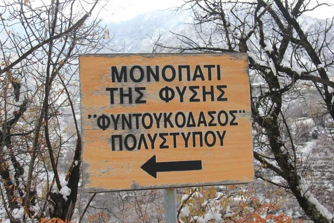 monopati_tis_fisis_polistipos_pitsilias