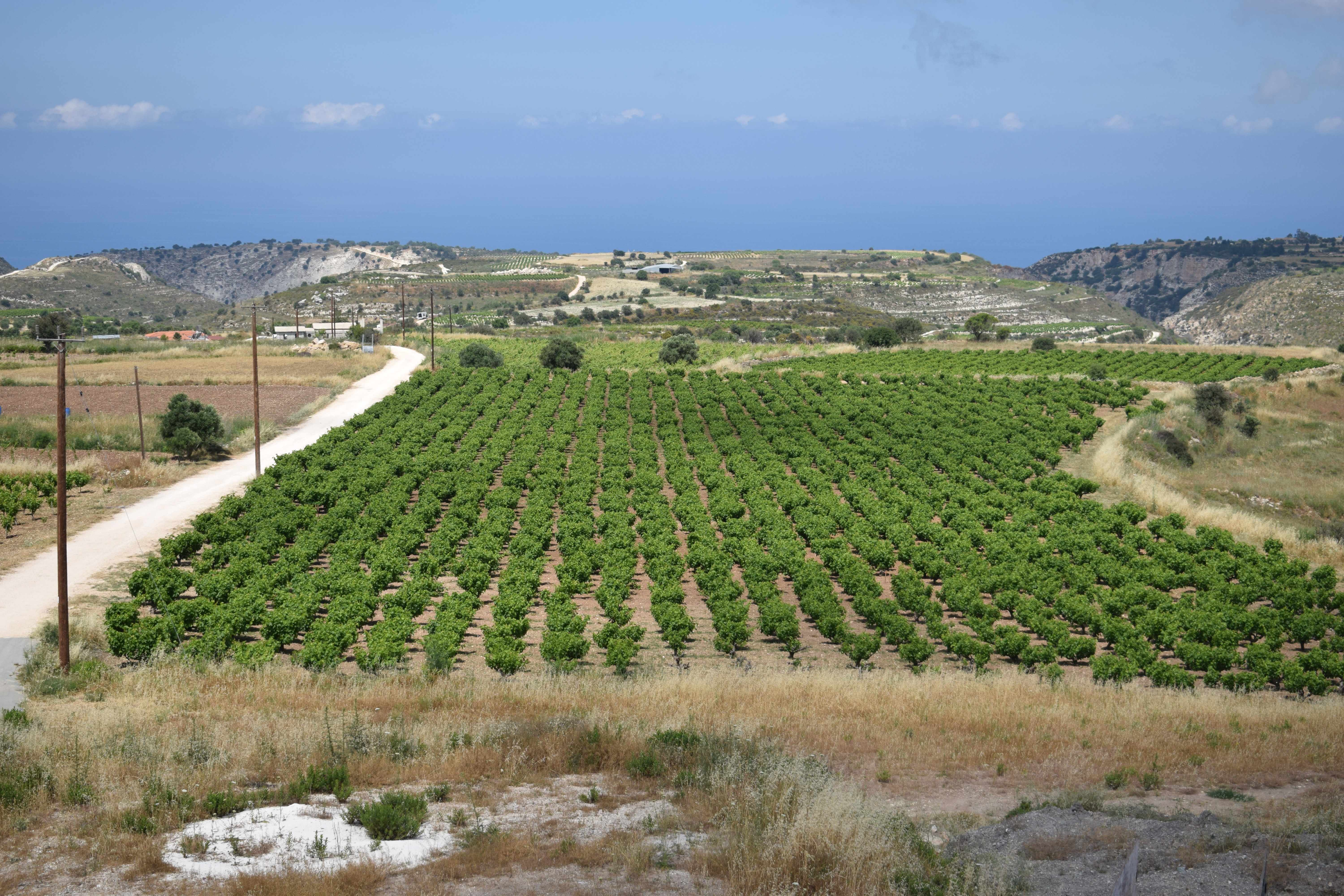 1st Pancyprian Symposium on Cyprus Wines 24th & 25th November
