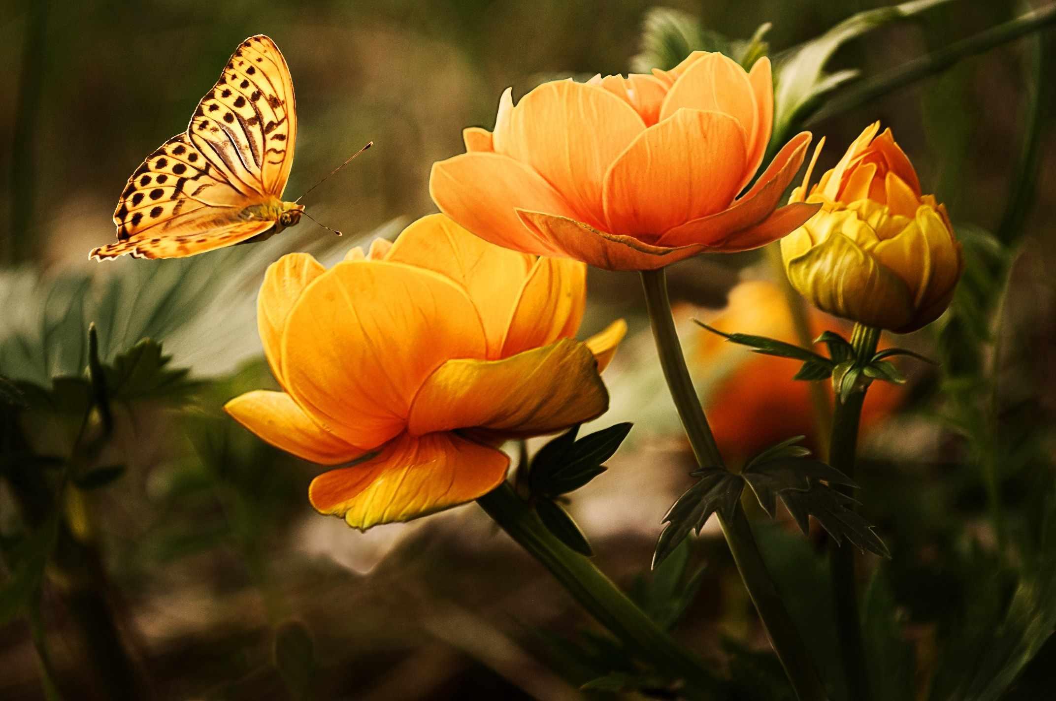 Красивые открытки природы и цветов