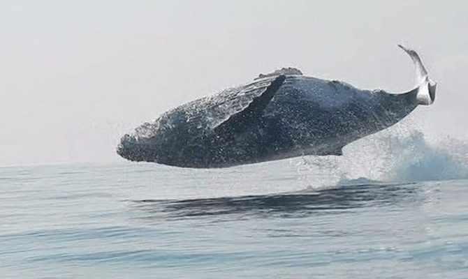 фоторедактор выпрыгивает кит в картинке