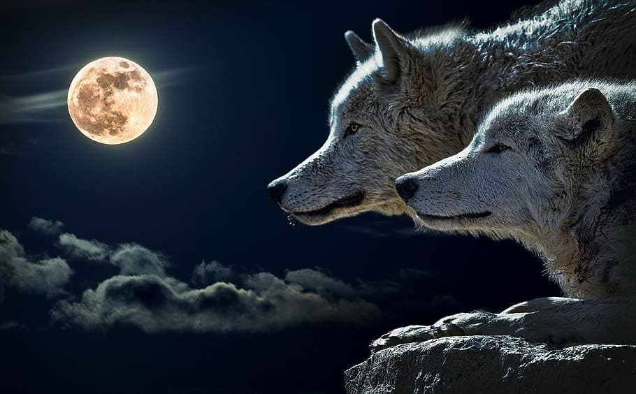 The First Full Wolf Moon 2020