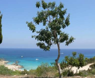 The Magical Pull of Fig Tree Bay