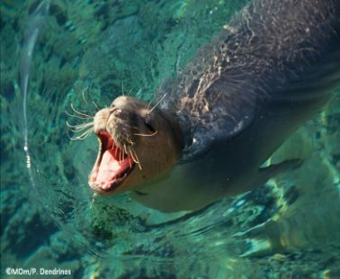 Seal in Cyprus?