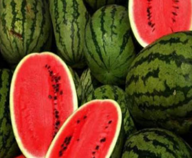 Watermelon – our favorite summer fruit